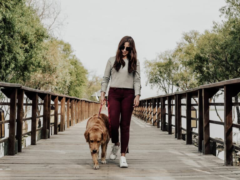 Hundespaziergang Augen schützen